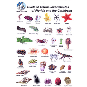 Invertebrates Card for Florida and the Caribbean