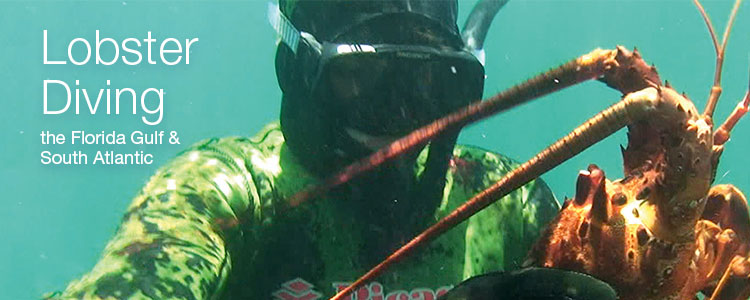 Lobster Diving the Florida Gulf & South Atlantic