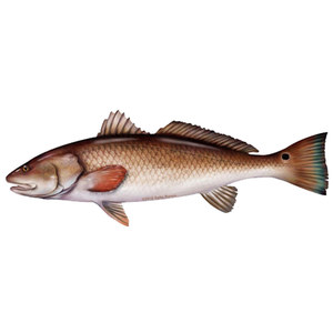 Redfish Profile Fish Decal
