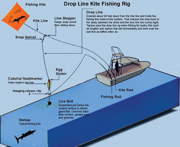 Example of a drop line on a kite fishing rig