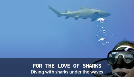 FOR THE LOVE OF SHARKS - Diving with sharks under the waves.